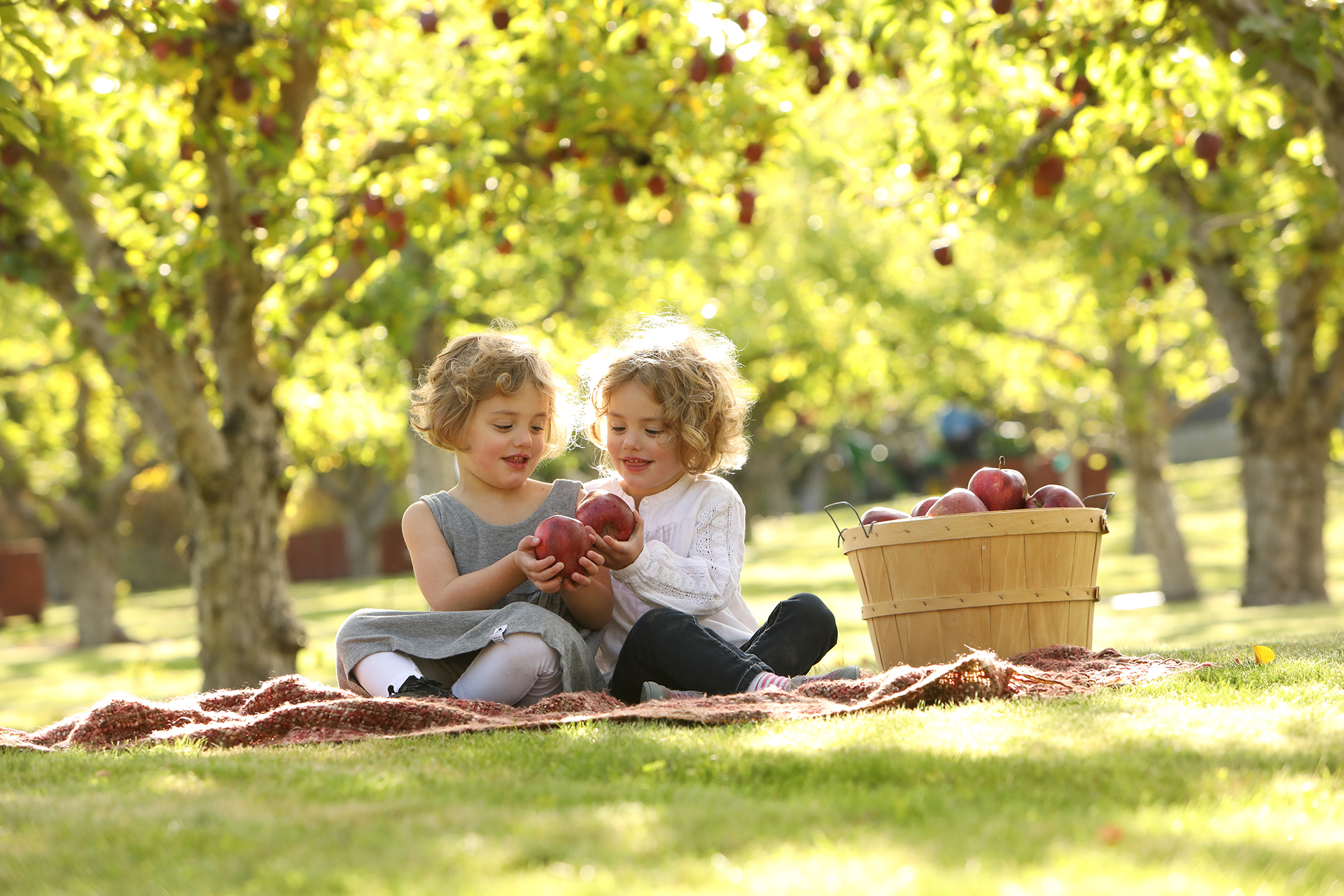 Curly blond haired girls sitting on a blanket with apples in the orchard sun